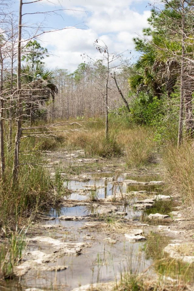 Everglades hiking trails