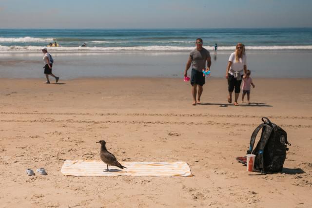 A bird on a beach towel at Ocean Beach
