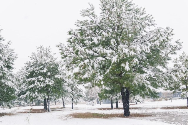Trees covered with snow from the 2010 North American Blizzard