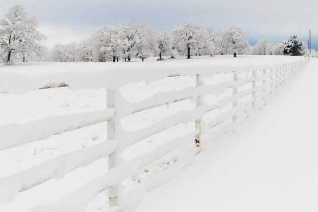 A fence and trees covered with snow