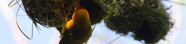 Bird Nest in Tree