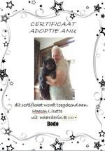 Adoptie-Bodo