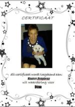 Adoptie-Dina