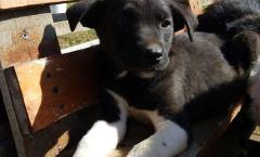 SADY / pup 4 maanden