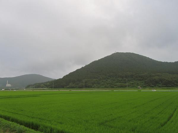 Ricefields Ishinomaki