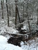Stream near our lunch break area