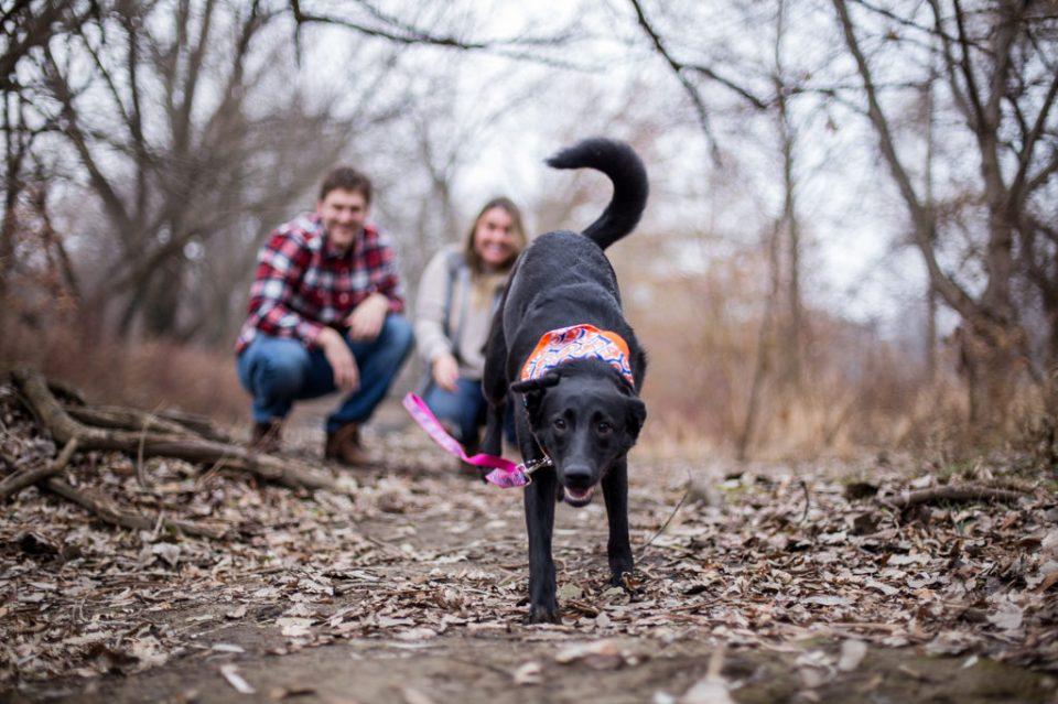 Dog runs toward camera during fall engagement photos at Frontier Park