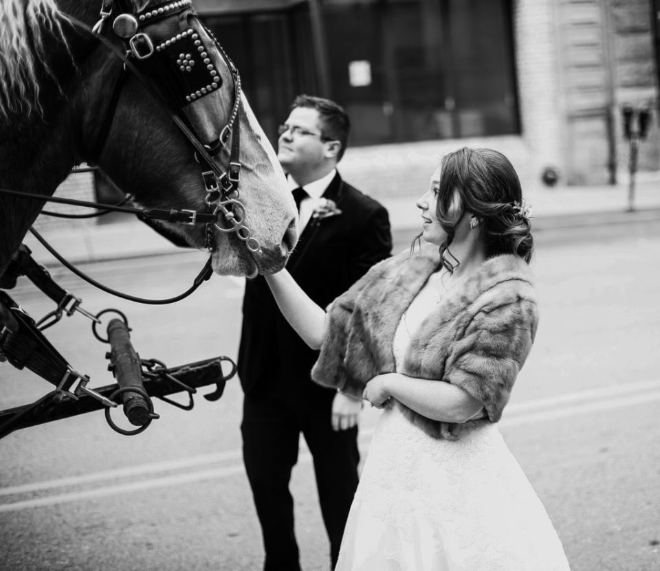 Bride and groom pet horses on horse drawn carriage in Washington, PA