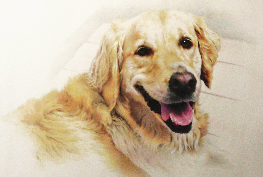 New Colored Pencil Drawing–Pet Portrait