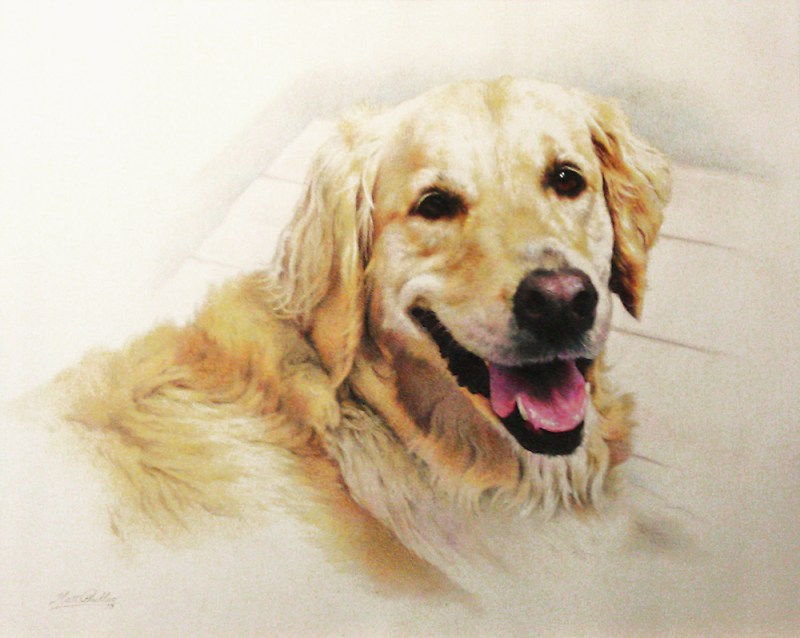 """Sydney"", 16 x 20 colored pencil pet portrait by artist Matt Philleo"