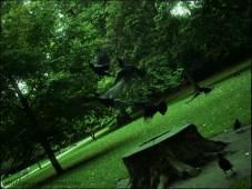 Cuervos, Londres