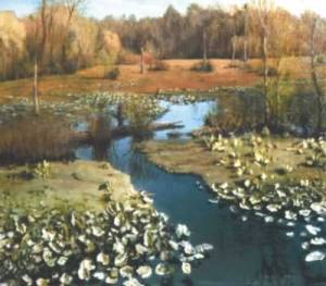 Tuckahoe Creek Marsh