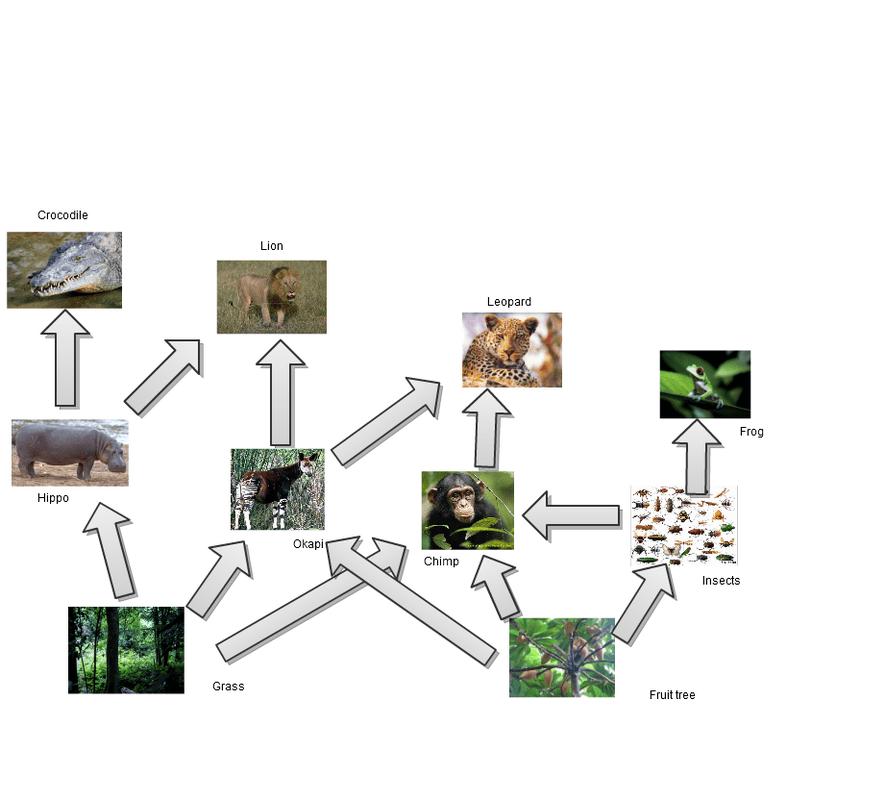 Amazon Food Chain Diagram