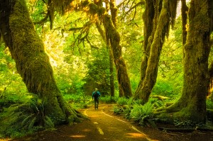hall of mosses, olympic national park, washington