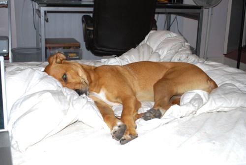 tyson, matt's puppy