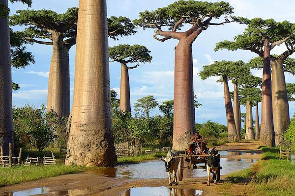 Earth Porn Trees