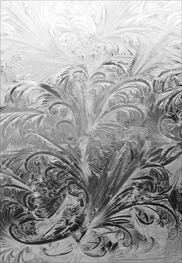 #iceflower