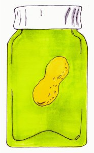 pickled peanut drawing