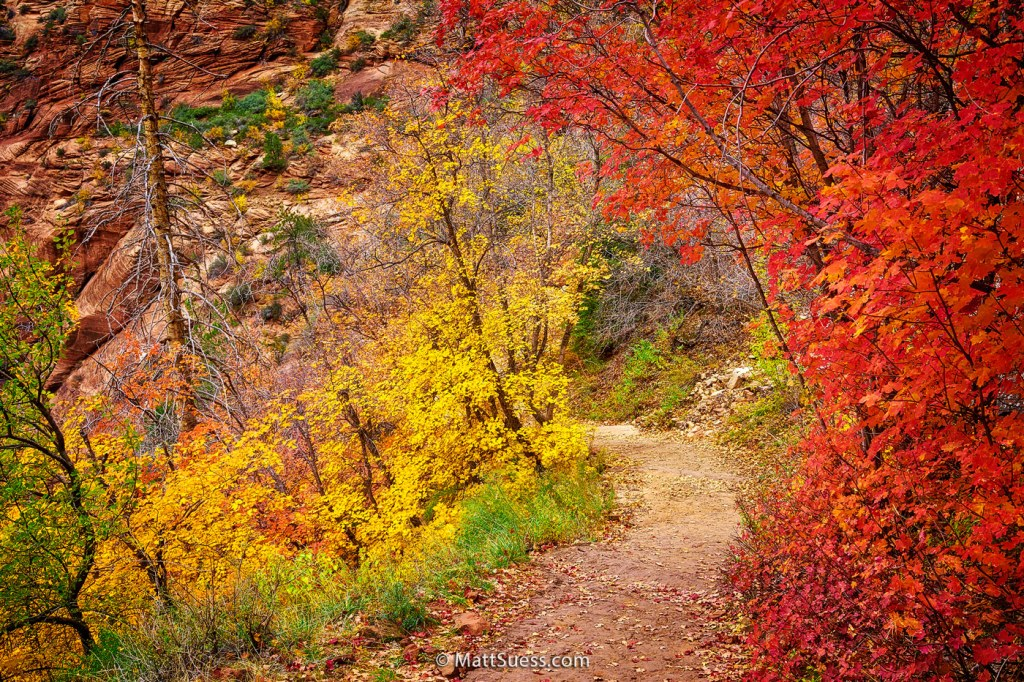 """Fall Colors of Zion"""