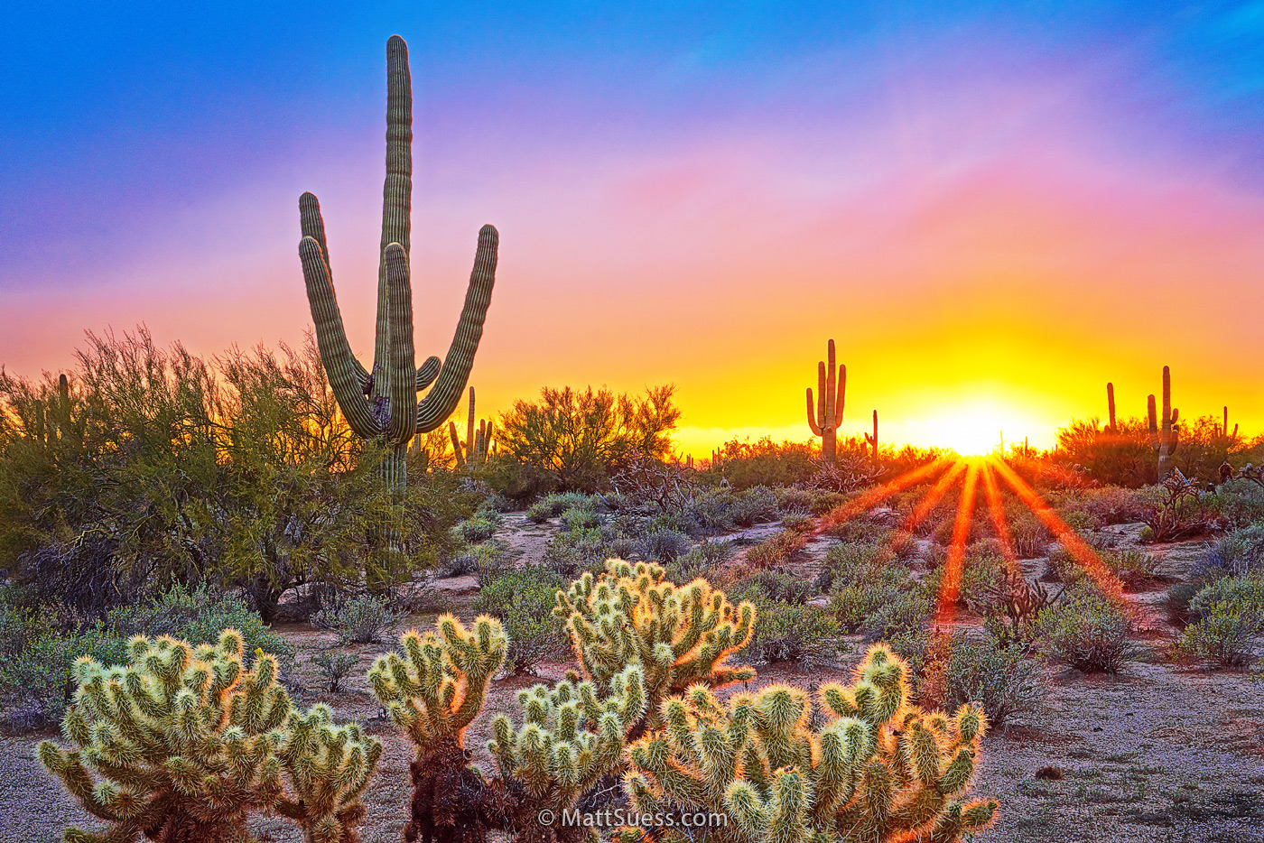 """Sonoran Desert DeLight"""