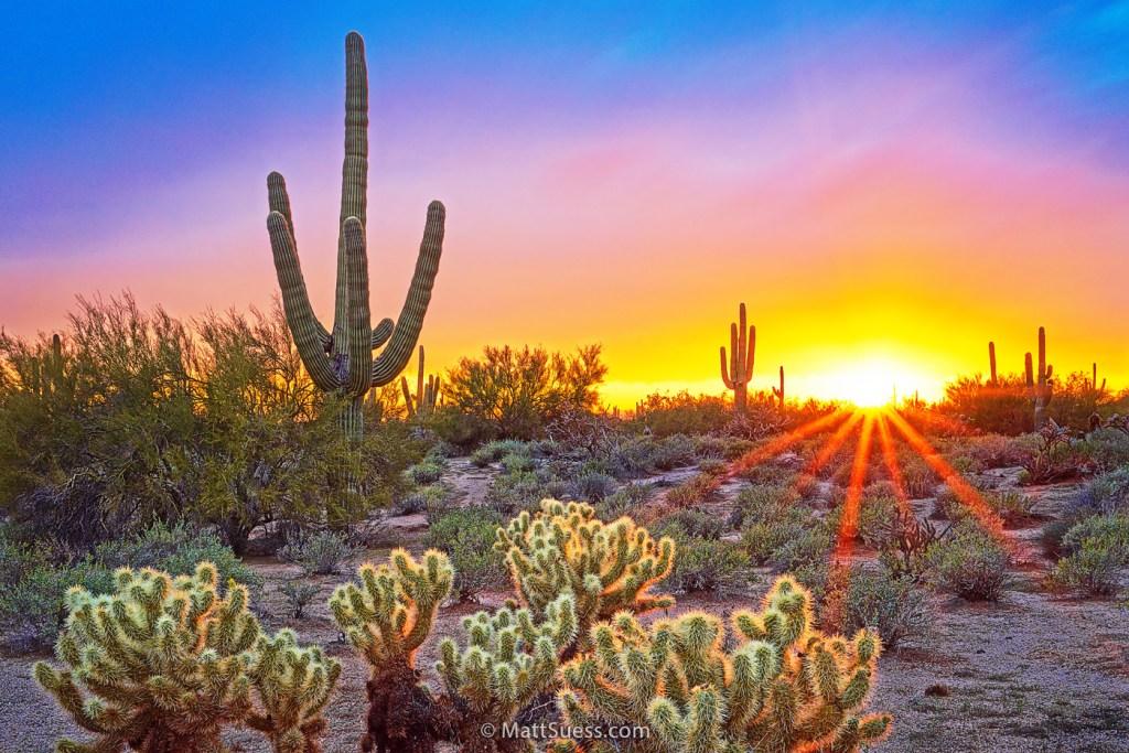 Sonoran-Desert-DeLight-1400