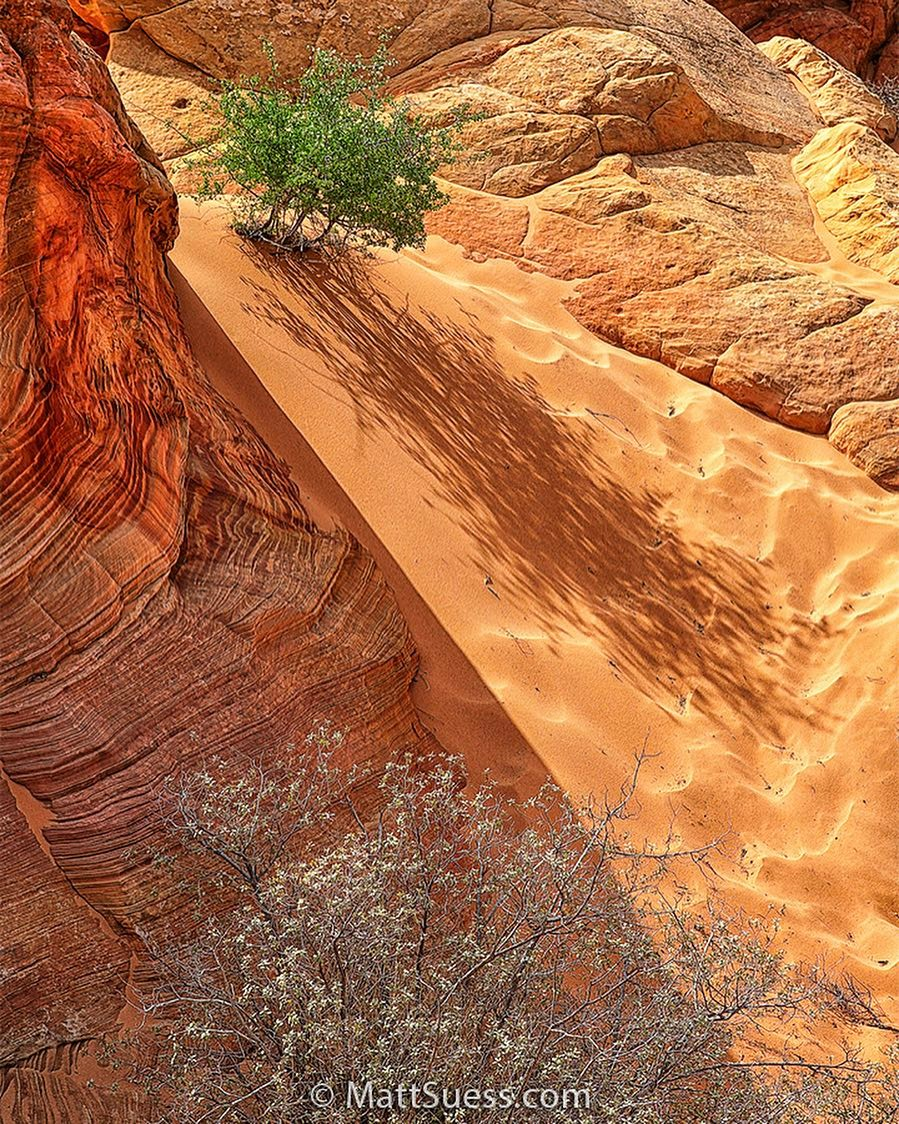 South Coyote Buttes, Cottonwood Cove, Instagram post date: