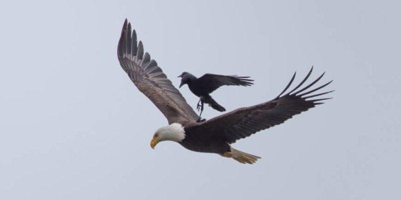 row-rides-eagle-bird-photography-phoo-chan