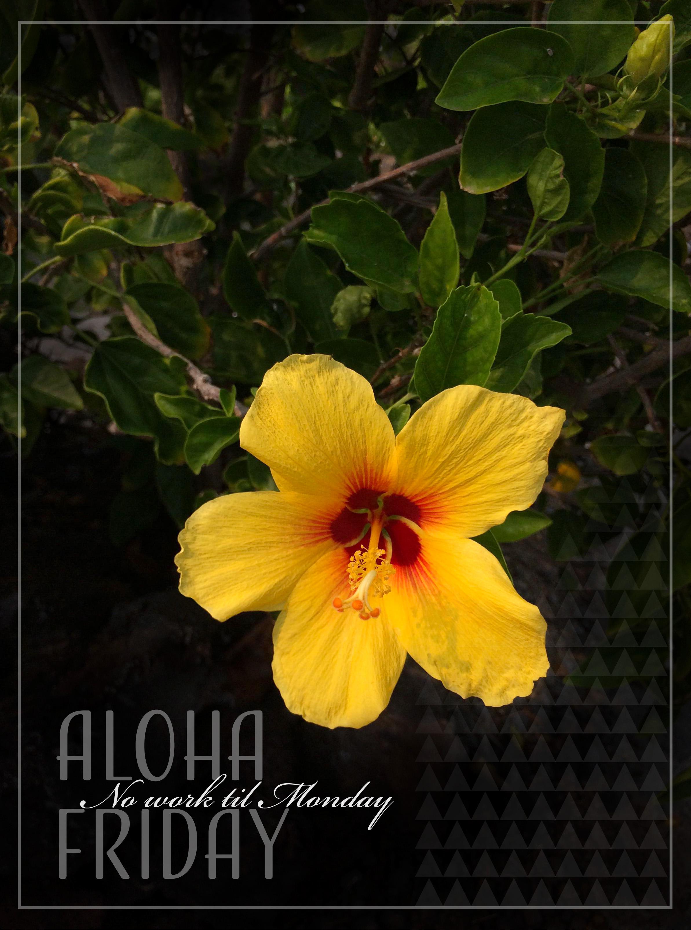 Yellow Hibiscus Aloha Friday