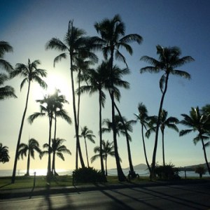 Coconut Trees Silhouette