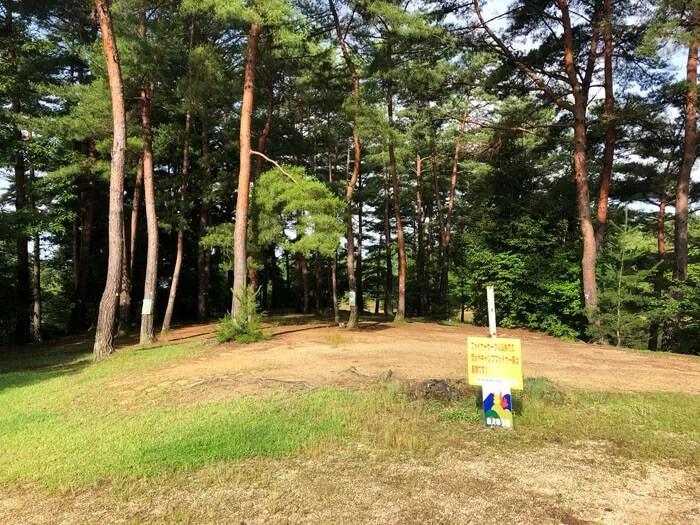 亀島キャンプ場の松林エリア