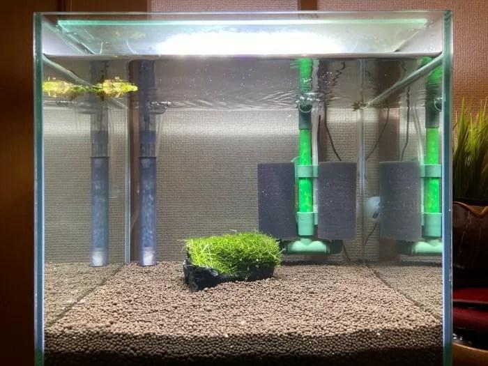 【レッドビーシュリンプ#2】底面式30cmキューブ水槽立ち上げから3~4週目