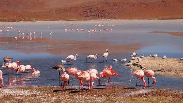 【ボリビア旅行】ウユニ奥地ツアーVer.4:天然のフラミンゴは非常に美しかった
