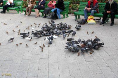 Folks are taking a break and enjoying feeding the birds