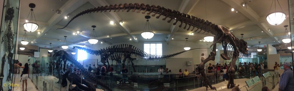 Panorama - sweet Stegosaurus in the background!