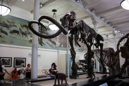 another angle on the mammoth