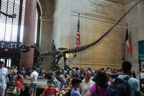 main hall - Barosaurus rearing up to protect its young from an attacking Allosaurus.