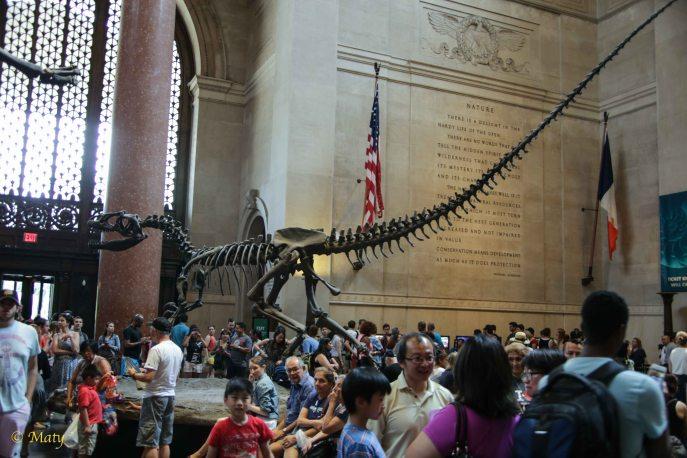 main hall - Barosaurus rearing up to protect its young from an attacking Allosaurus.