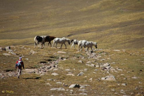 Horses approximately 3500 m above the sea level