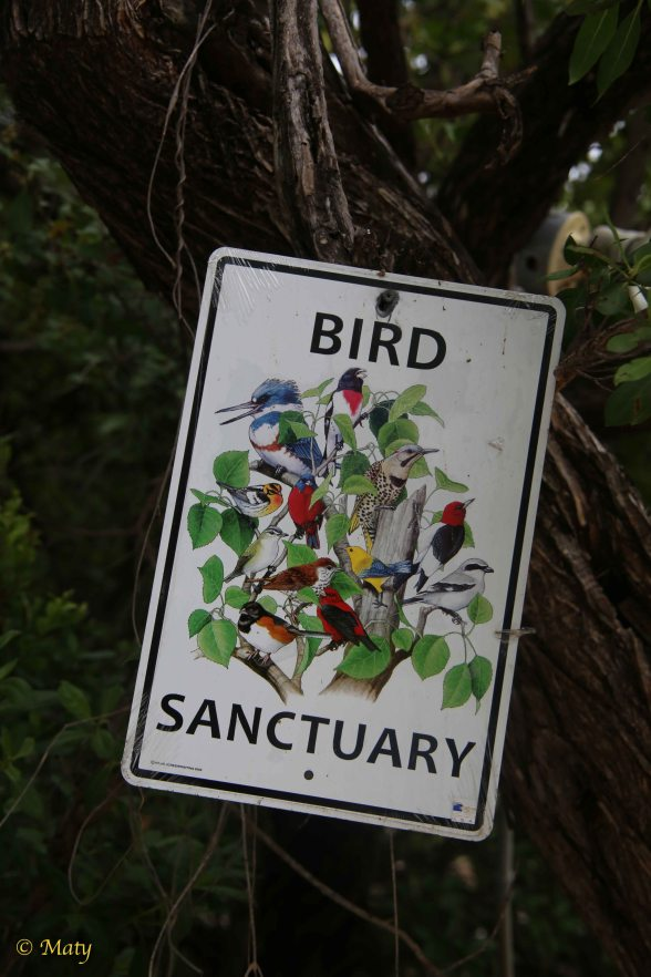 Bird Sanctuary at Key Largo, Florida!