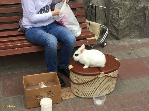 Bunny anybody?