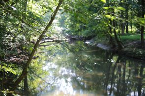 There are plenty of small streams in the Rock Creek Park