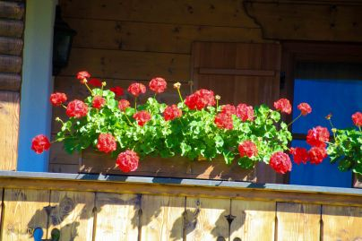 Flowers - they are on every balcony!