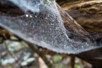 Another view of the spider web
