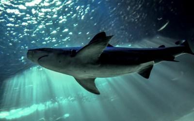 Biodiversidad: «Hay que acabar con ciertas prácticas pesqueras», dice la UICN – RTL