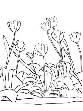 11_tulip_mm