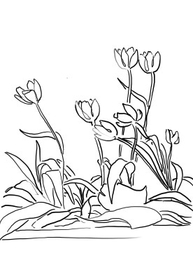 12_tulip_mm