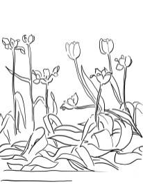 22_tulip_mm
