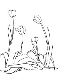 8_tulip_mm