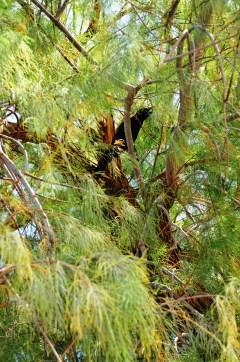 bird in Furnace creek