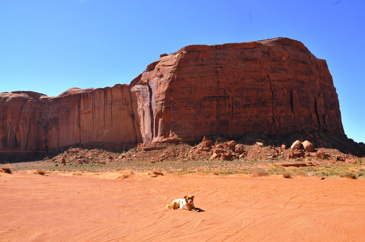 monument valley THE dog